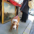 Art Lover in Siena