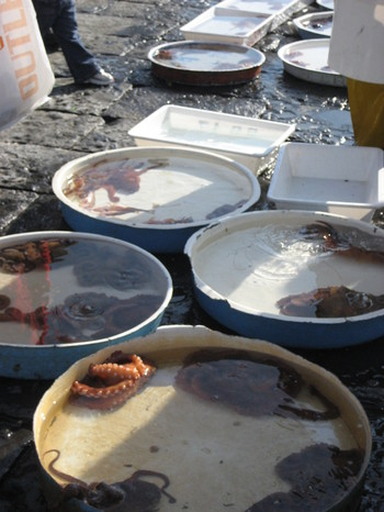 Tubs of Fresh Sea Creatures for Sale in Naples