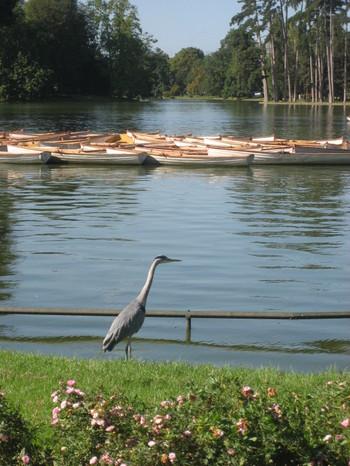 Bois de Boulogne in the Morning - September 2007