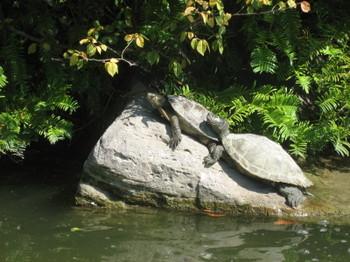 Turtles soaking up some sunshine in Bois de Boulogne