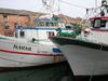 Fishing Boats in Chioggia