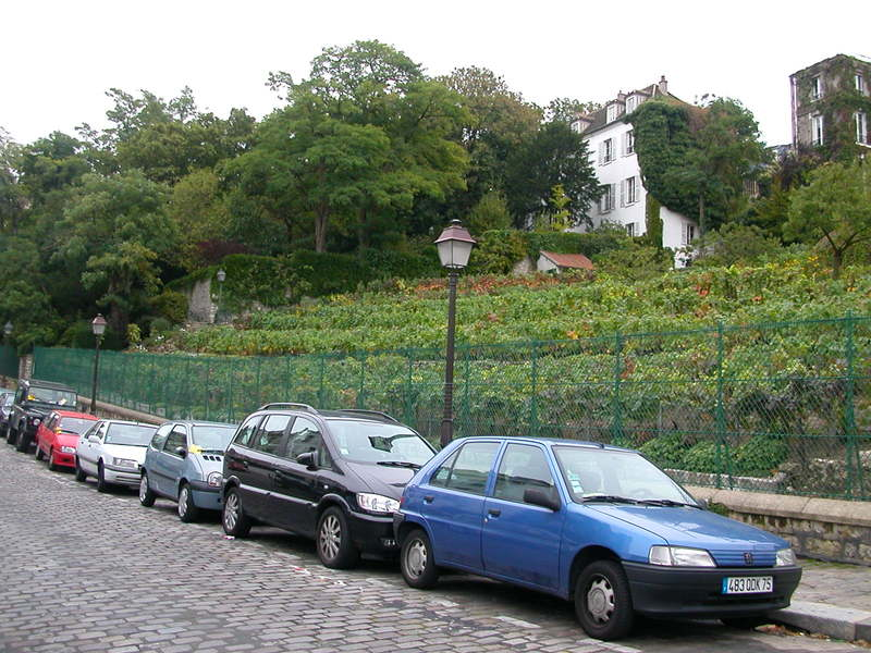 The Last Vineyard in Paris