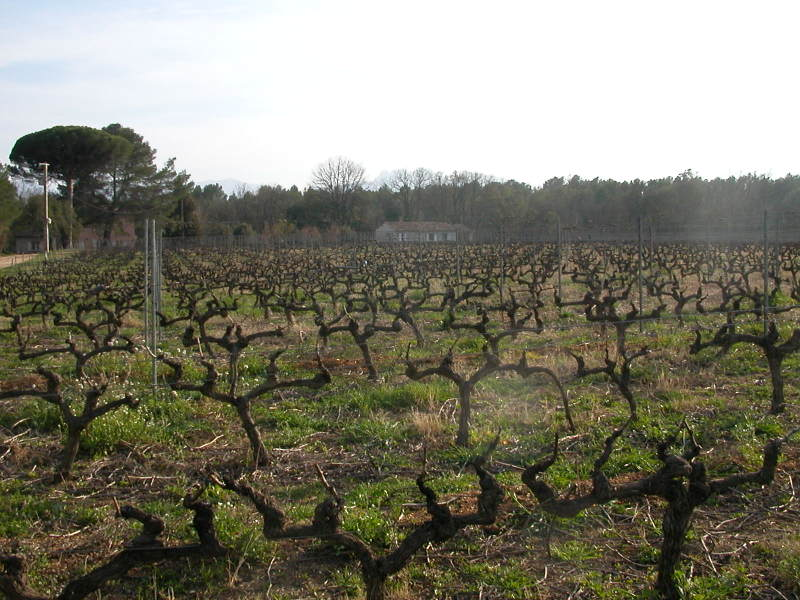 Domaine de Marchandise in the Var